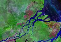 barriera corallina amazzoni